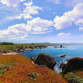 California Pigeon point beach in Cabrillo Hwy coastal hwy 1 — Stock Photo