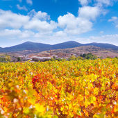 Aragon Paniza autumn golden red vineyard in Zaragoza — Stock Photo