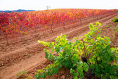 Carinena and Paniza vineyards in autumn red Zaragoza Spain — Stock Photo