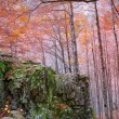 Autumn forest in Pyrenees Valle de Ordesa Huesca Spain — Stock Photo #40380935
