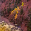 Autumn forest in Pyrenees Valle de Ordesa Huesca Spain — Stock Photo #40382091