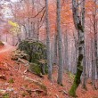 Autumn forest in Pyrenees Valle de Ordesa Huesca Spain — Stock Photo #40387961
