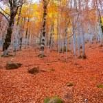 Autumn forest in Pyrenees Valle de Ordesa Huesca Spain — Stock Photo