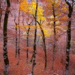 Autumn forest in Pyrenees Valle de Ordesa Huesca Spain — Stock Photo #40388473