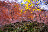 Autumn forest in Pyrenees Valle de Ordesa Huesca Spain — Stock Photo