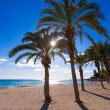 Alicante San Juan beach of La Albufereta with palms trees — Stock Photo #42181869