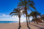 Alicante San Juan beach of La Albufereta with palms trees — Stock Photo