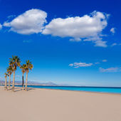 Alicante San Juan beach with palms trees of Mediterranean — Stock Photo