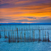 Albufera sunset lake park in Valencia el saler Spain — ストック写真