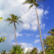 Coconut palm trees tropical typical background — Stock Photo #5393478