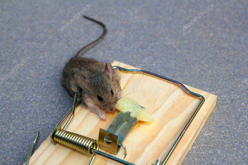 на то ловить мышей мышеловку