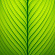 Green leaf -  