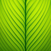 Green leaf — Vettoriale Stock
