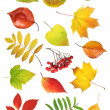 Collection autumn leaves - Stock Photo