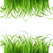 Green grass with ladybirds - Stock Vector