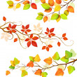 Collection of autumn leaves - Stock Vector
