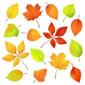 Hojas de otoño — Vector de stock