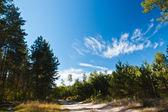 Skogsmark scen — Stockfoto