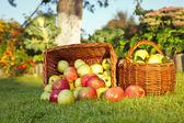 Manzanas rojas y verdes — Foto de Stock