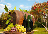 Still Life with Grapes — Stock Photo