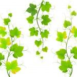 Grape leaves — Stock Vector #13557967