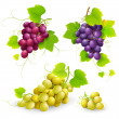 Bunches of grapes — Stock Vector #13558010