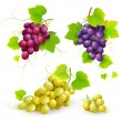 Stock Vector: Bunches of grapes