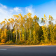 Autumn forest near the road — Stock Photo