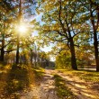 Autumn forest in the sun - Stock Photo