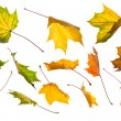 Collection of autumn leaves — Stock Photo