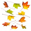 Collection of autumn leaves — Stock Photo #13659511