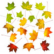 Collection of autumn leaves — Stock Photo #13659617