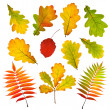 Stock Photo: Collection of autumn leaves