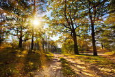 Autumn forest in the sun — Stock Photo