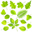 Collection of green leaves — Vector de stock