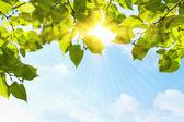 Yeşil yaprakları — Stok fotoğraf