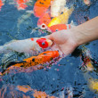 Feeding fish — Stock Photo #24796455