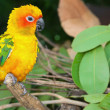 Tropical parrot — Stock Photo