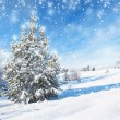 Winter background with spruce — Stock Photo #31810687