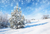Winter background with spruce — Stock Photo