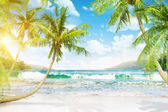 Tropical island with palm trees — Stock Photo