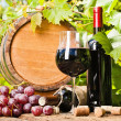 Wine, grapes and grapevine composition — Stock Photo