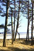 Coastal Forest — Stock Photo