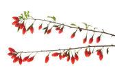 Goji berries (Lycium barbarum) — Stock Photo