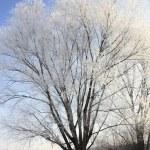 Hoar frost — Stock Photo #38569599