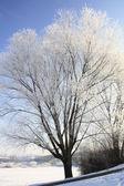 Hoar frost — Stock Photo