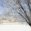 Hoar frost — Stock Photo #38864233