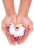 Black African American woman hand holding an orchid flower — Stock Photo