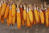 Ripe corn-cobs — Stock Photo