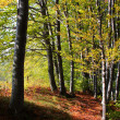 Leafy forest in autumn - Stock Photo
